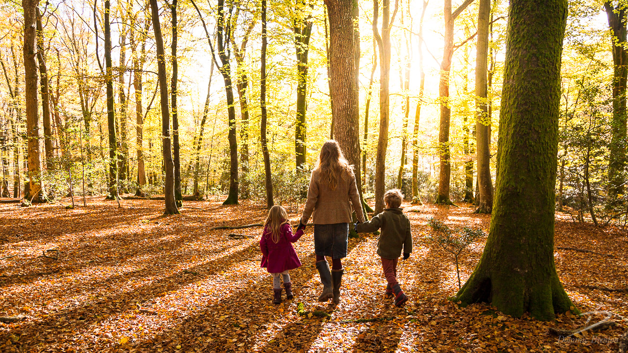 Woman holding hands with little girl and boy, walking through sunlit woodland in autumn