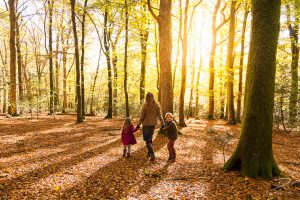 Woman holding hands with little boy and girl, walking through sunlit New Forest