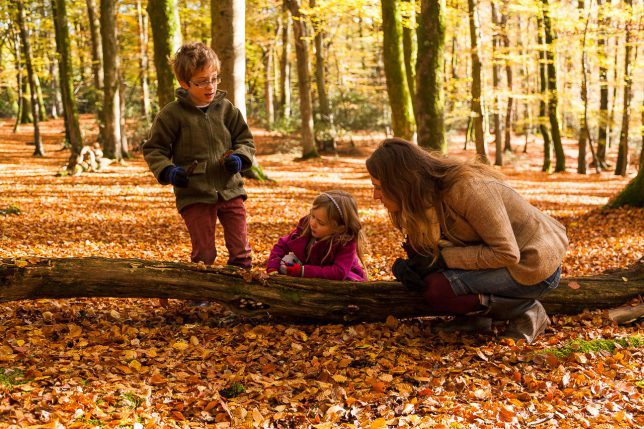 Mother, daughter and son looking at toadstools on a tree trunk in the New Forest