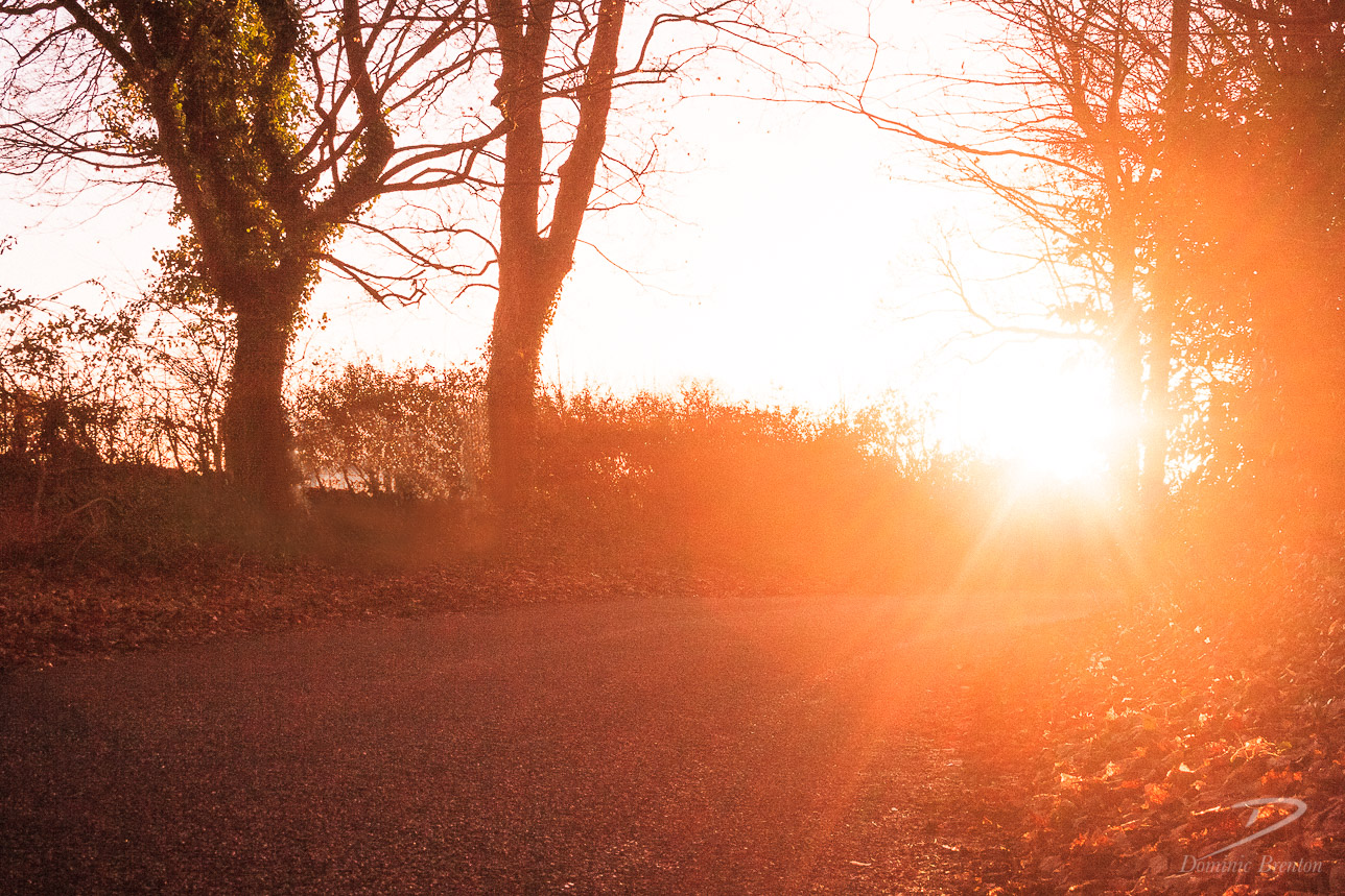 Sunburst in a country lane