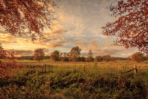 Autumn in Hampshire
