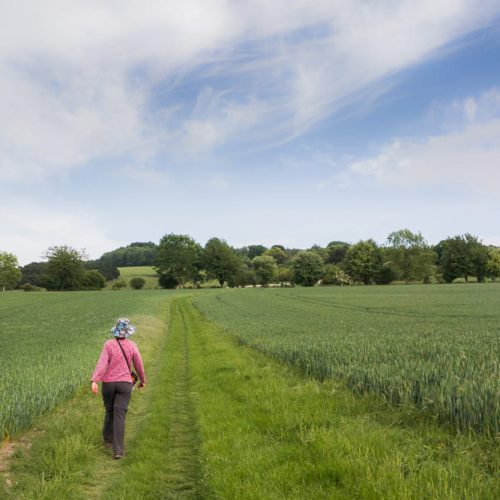Walker out on the Hampshire Downs